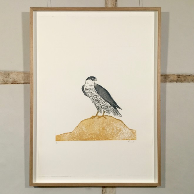 Peregrine Falcon, from Birds of Prey