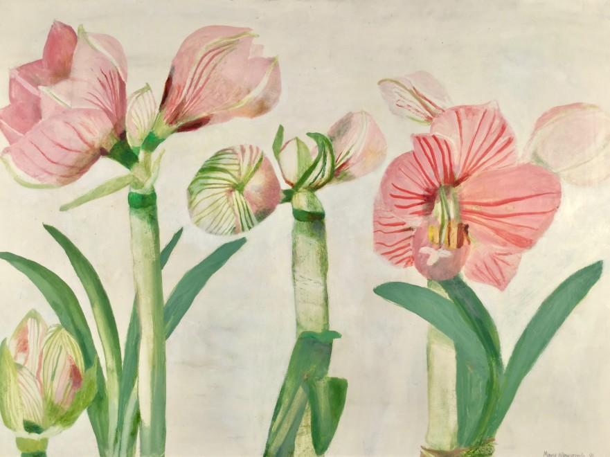 Studies of Amaryllis Flowering