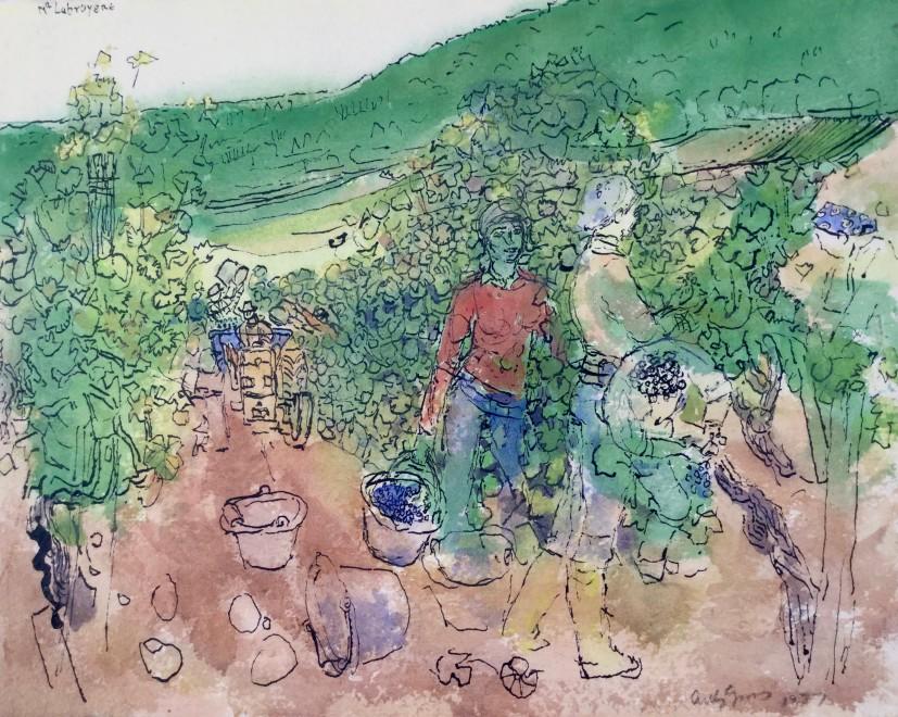 Monsieur Labruyere's Vineyard