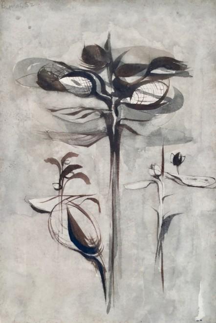 Study of Plant E (III)