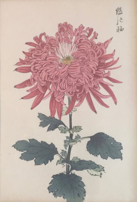 One Hundred Years of Chrysanthemums XIII