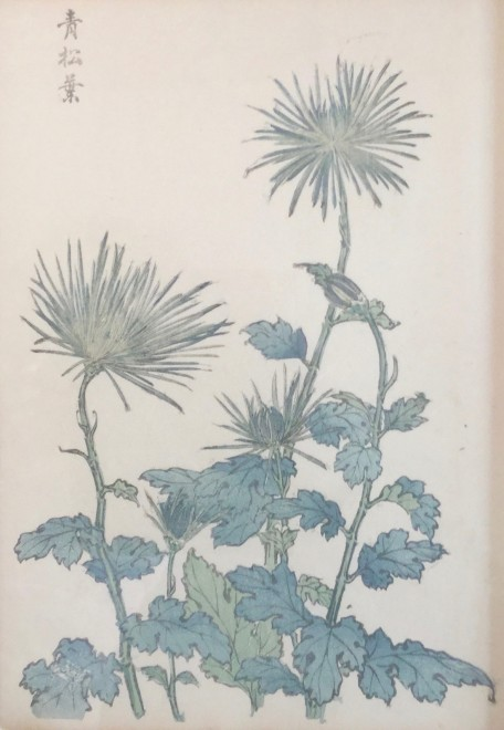 One Hundred Years of Chrysanthemums III