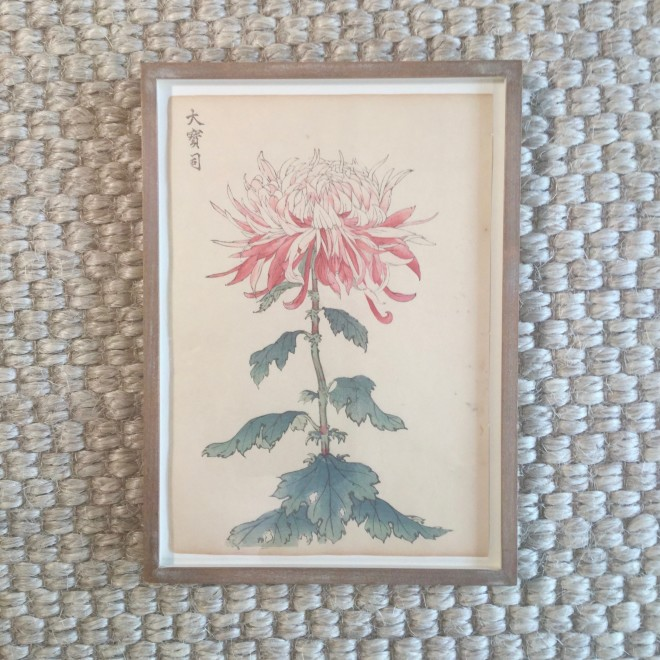 One Hundred Years of Chrysanthemums VI