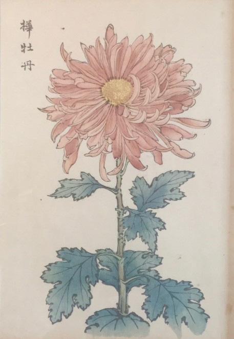 One Hundred Years of Chrysanthemums VII