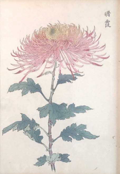 One Hundred Years of Chrysanthemums I