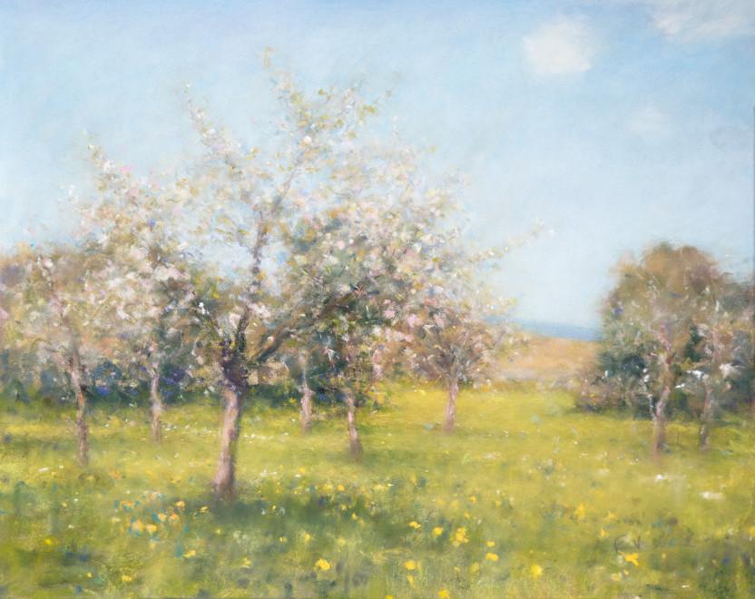 Bob Richardson PS, Orchard springtime