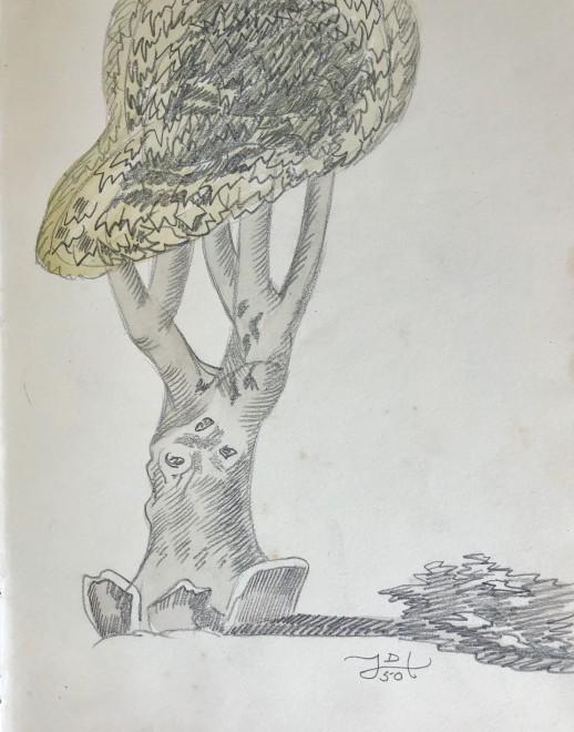 Doris Hatt, Tree, St. Tropez, 1950