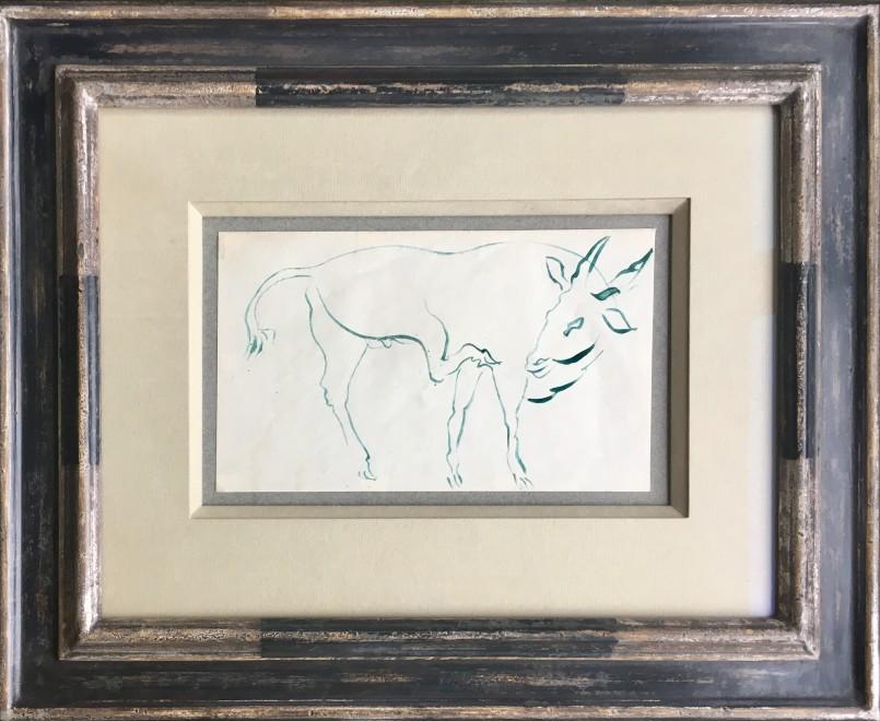 Study of a Brahman Bull
