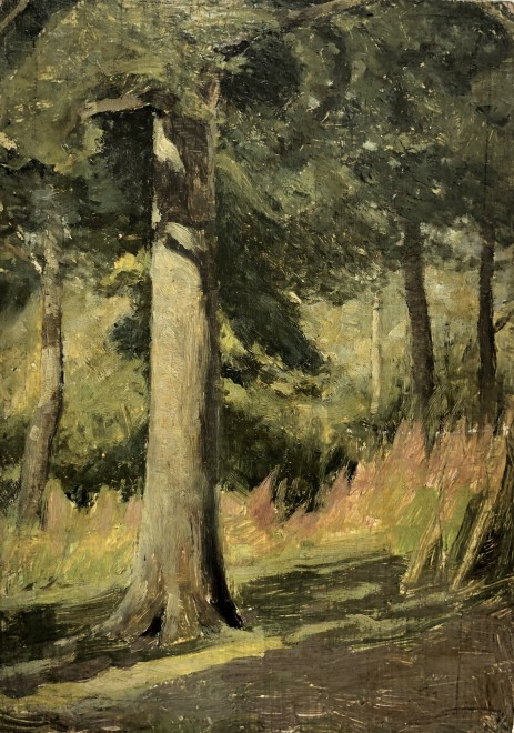 William Cubitt Cooke, Willow-herb, Sunshine in an Oak Wood, Hampshire, c. 1910