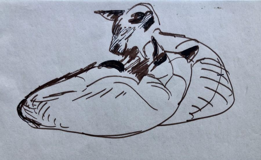 Enid Marx, Study of Siamese Cats, c. 1950
