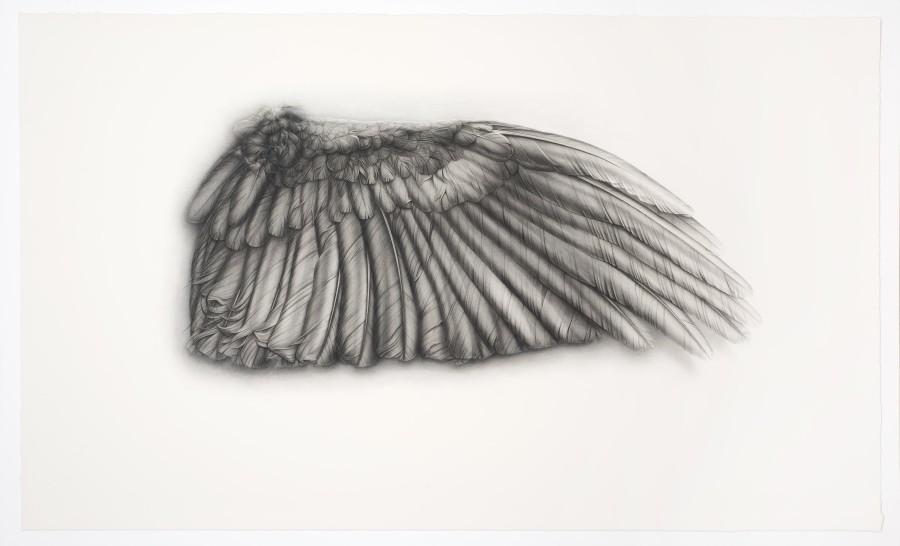 <p>Grey Wing</p><p>2009</p><p>Conté, pencil, ink and gouache on paper</p><p>130 x 220 cm</p>