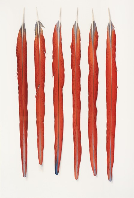 <p>Six Red Feathers   </p><p>2015</p><p>Gouache on paper</p><p>71 x 48 cm</p>