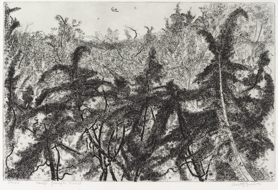 Large Juniper Forest
