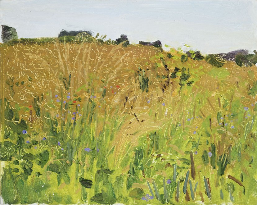 Field with Purple Flowers