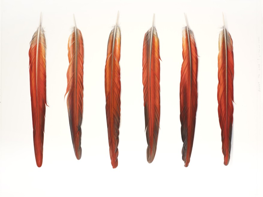 Six Red Feathers Underside