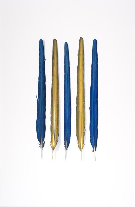 Yellow and Blue Feathers