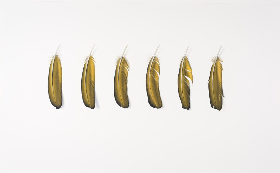 Six Yellow Feathers