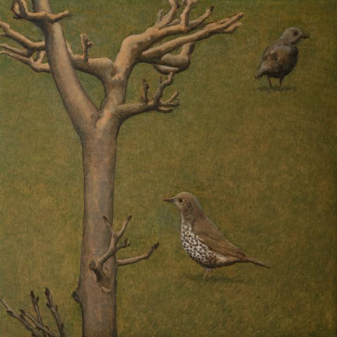 Mistle Thrush and Tree