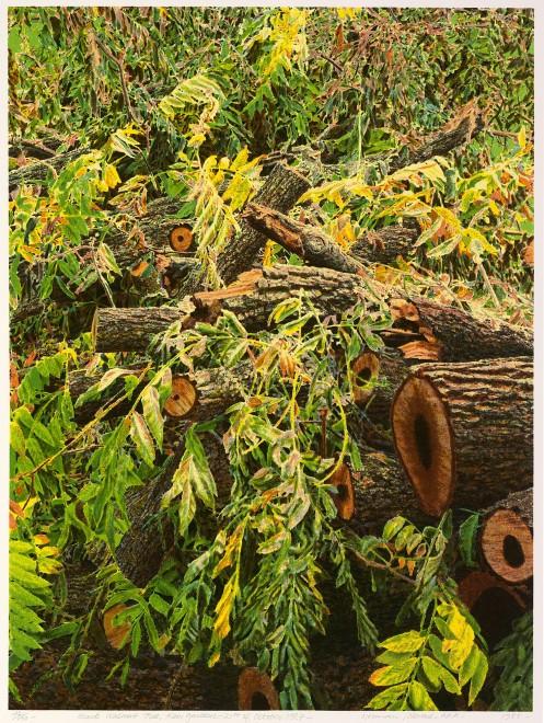 Black Walnut Tree, Kew Gardens, 21st October