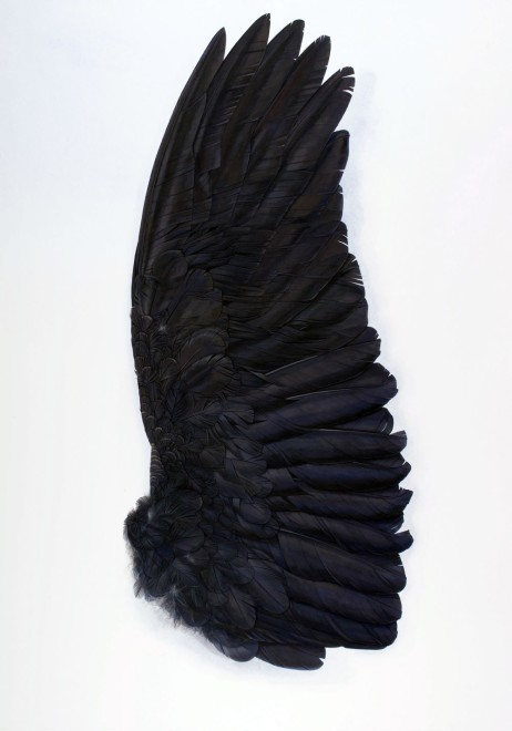 Black Wing Underside