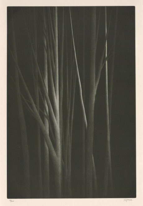 Forest Nocturne III