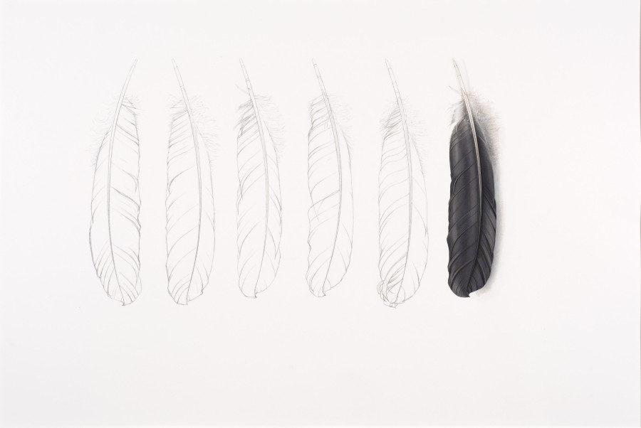 <p>One Grey Feather   </p><p>2014</p><p>Gouache and pencil on paper</p><p>45.5 x 69 cm</p>