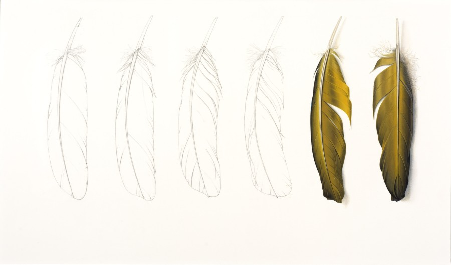<p>Two Yellow Feathers and Pencil Drawing&nbsp;&nbsp;</p><p>2016</p><p>Gouache and pencil on paper</p><p>30 x 30.5 cm</p>