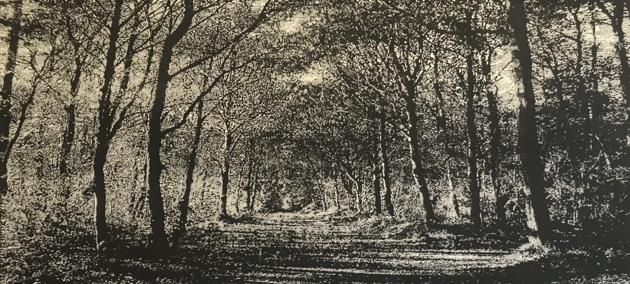 Trevor Price RE, Woodland Walk