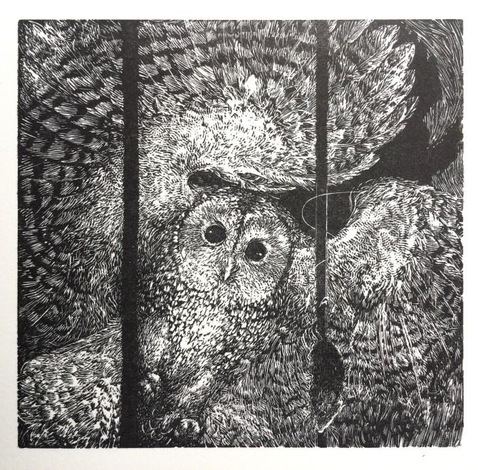 Ann Tout RE, Tawny Owl