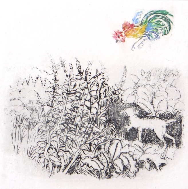 Rosamund Jones RE, Wild Cockerel
