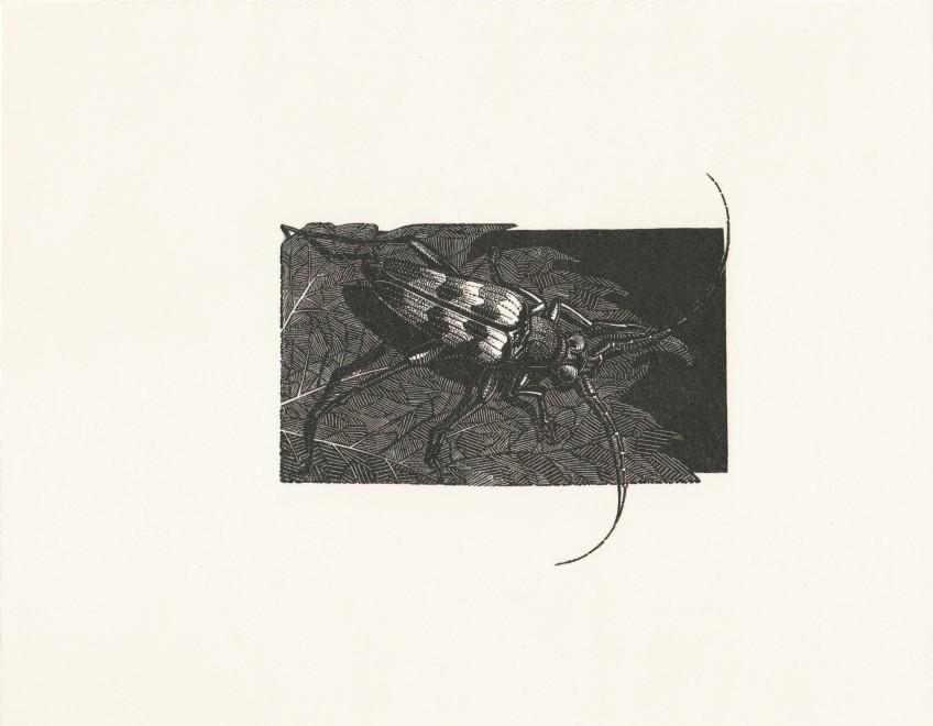 Anne Desmet RA RE, Beetle