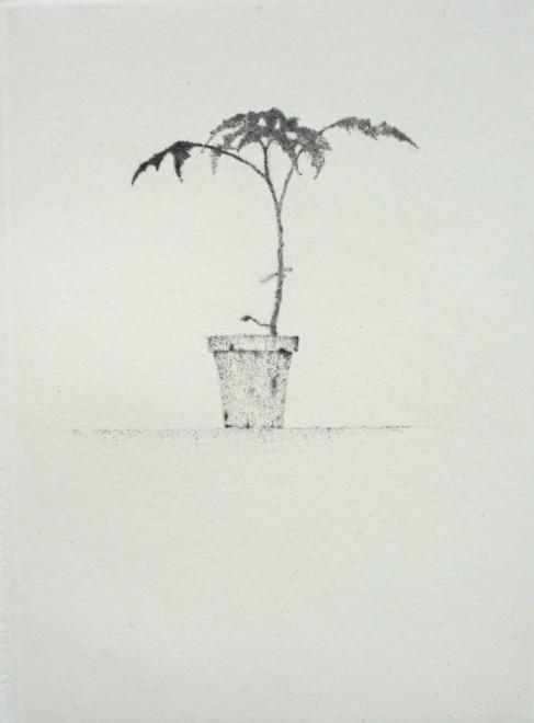Lars Nyberg RE, Small Plant