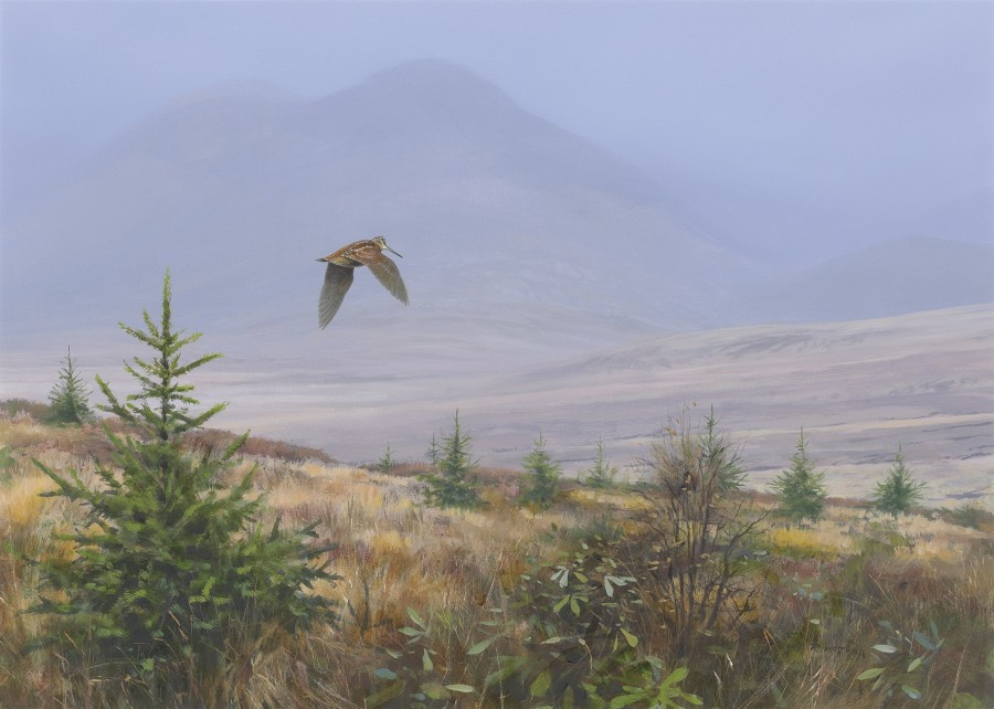 Rodger McPhail, Flying woodcock