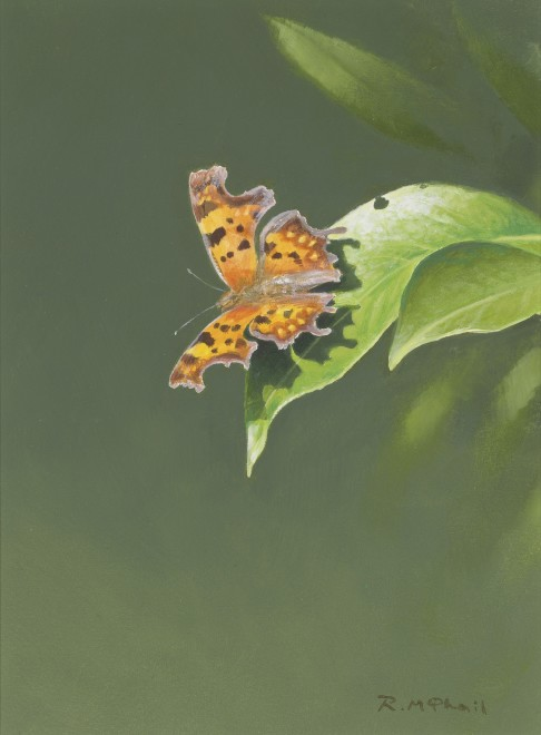 Rodger McPhail, Comma