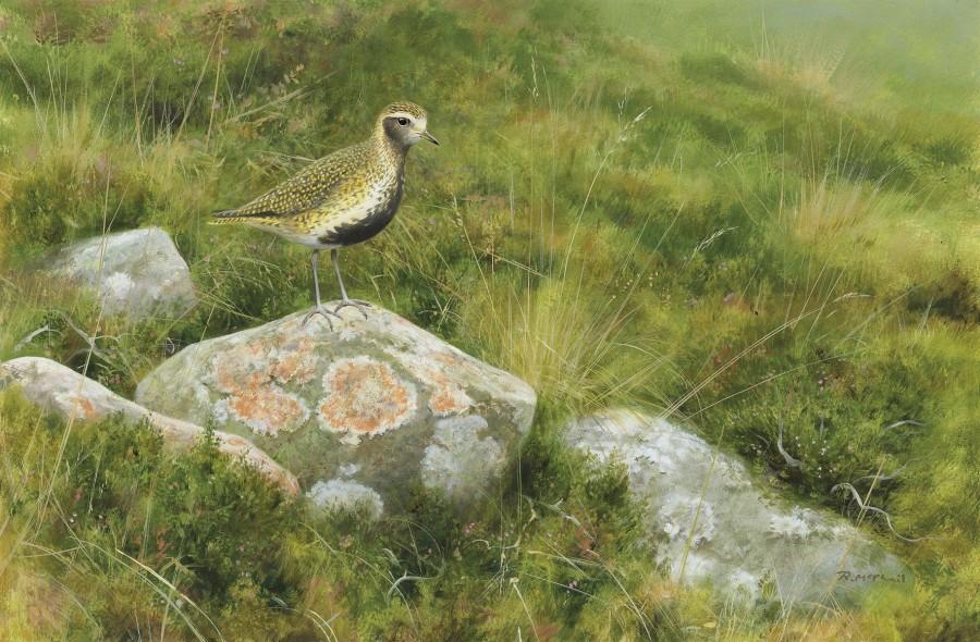 Rodger McPhail, Golden Plover