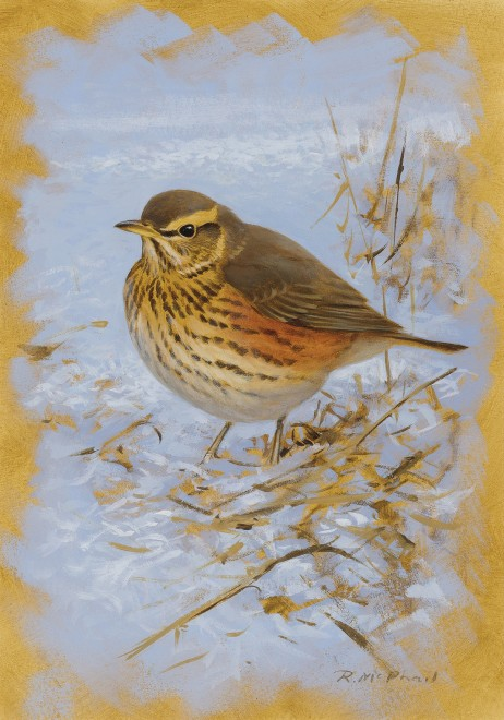 Rodger McPhail, Redwing