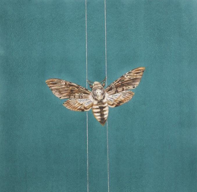 Jennifer Hooper, Moth on golden thread
