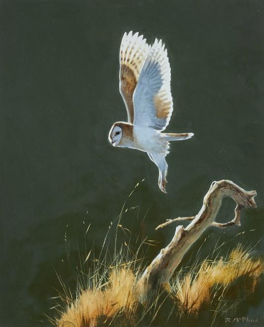 Rodger McPhail, Barn Owl