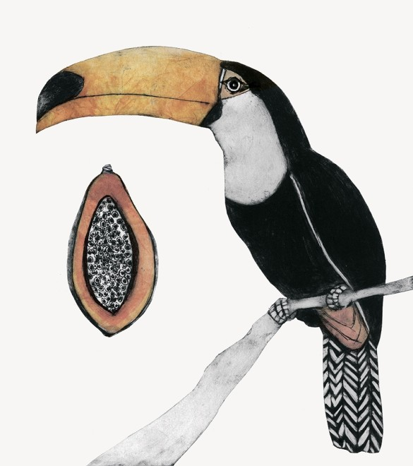 Beatrice Forshall, Toco toucan
