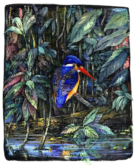 Emma Faull, Jungle Kingfisher
