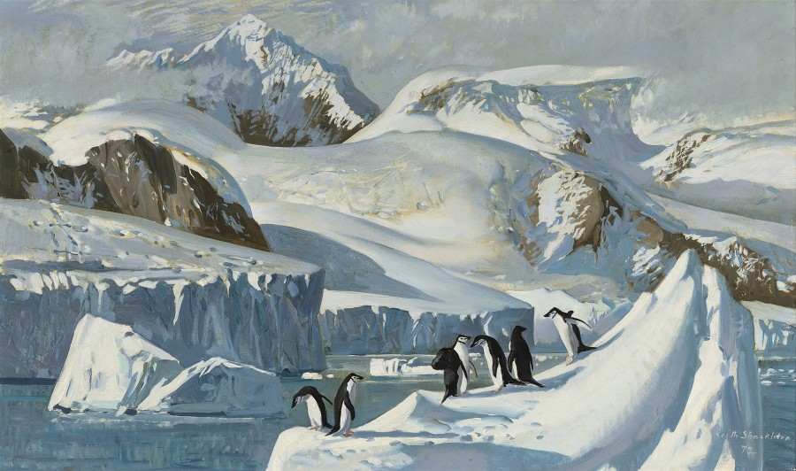 Keith Hope Shackleton, MBE, Chinstrap penguins near the water's edge, Antarctica