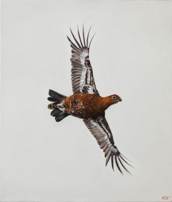 Anna Clare Lees-Buckley, Crossing Grouse study