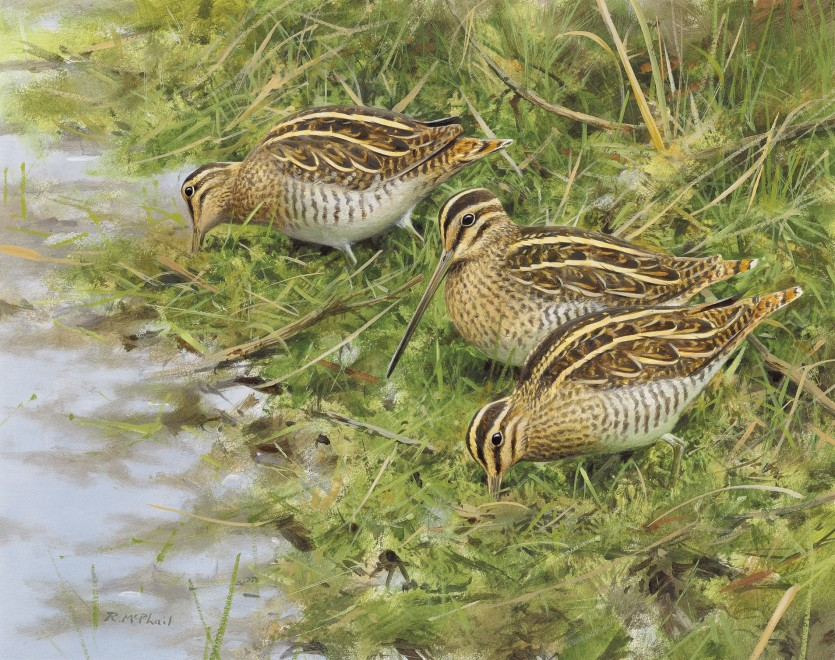 Rodger McPhail, Three Snipe