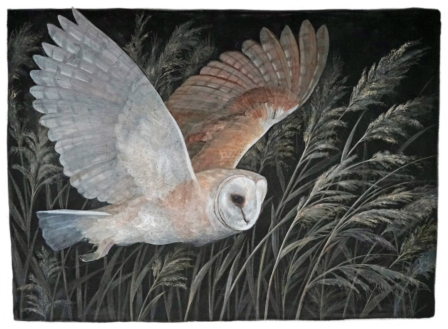 Emma Faull, Barn Owl hunting