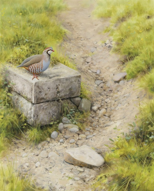 Rodger McPhail, Red-legged Patridge