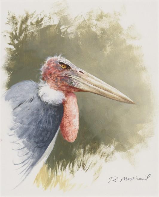 Rodger McPhail, Marabou Stork