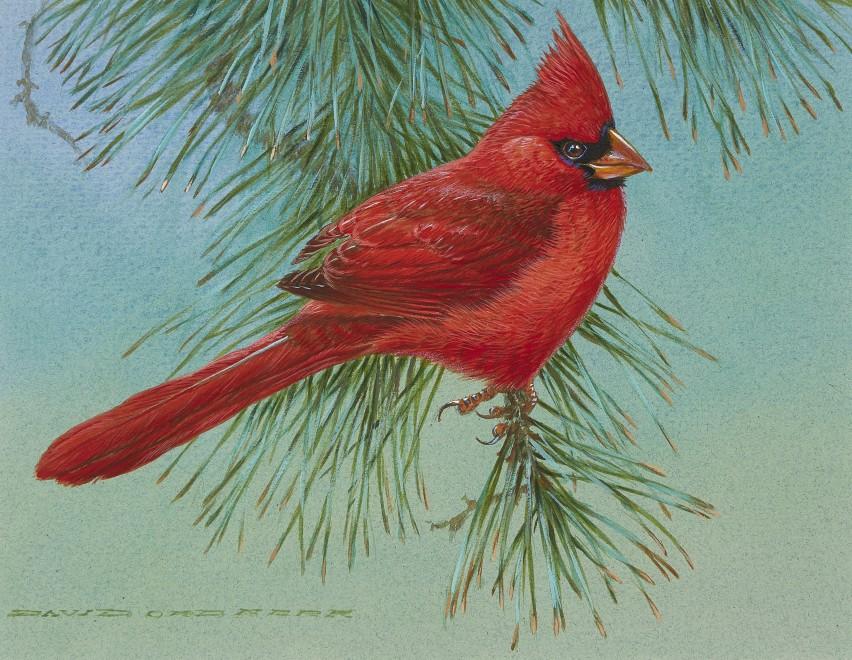 David Ord Kerr, Male Cardinal