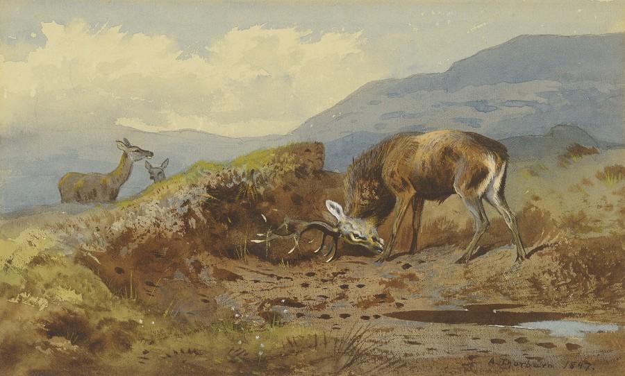 Archibald Thorburn, Stag