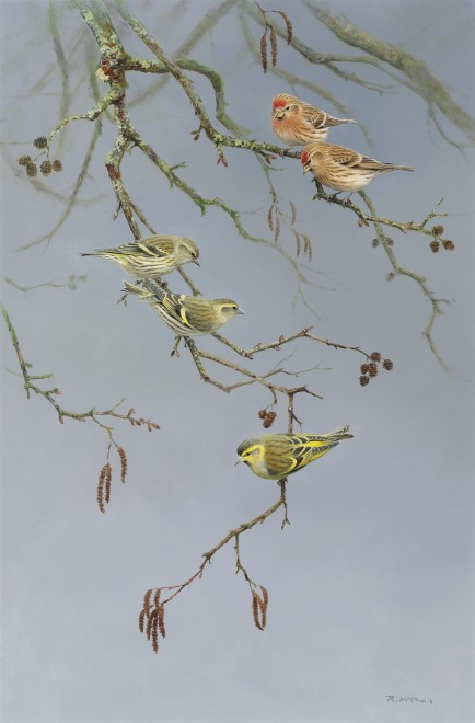 Rodger McPhail, Siskins and Redpolls