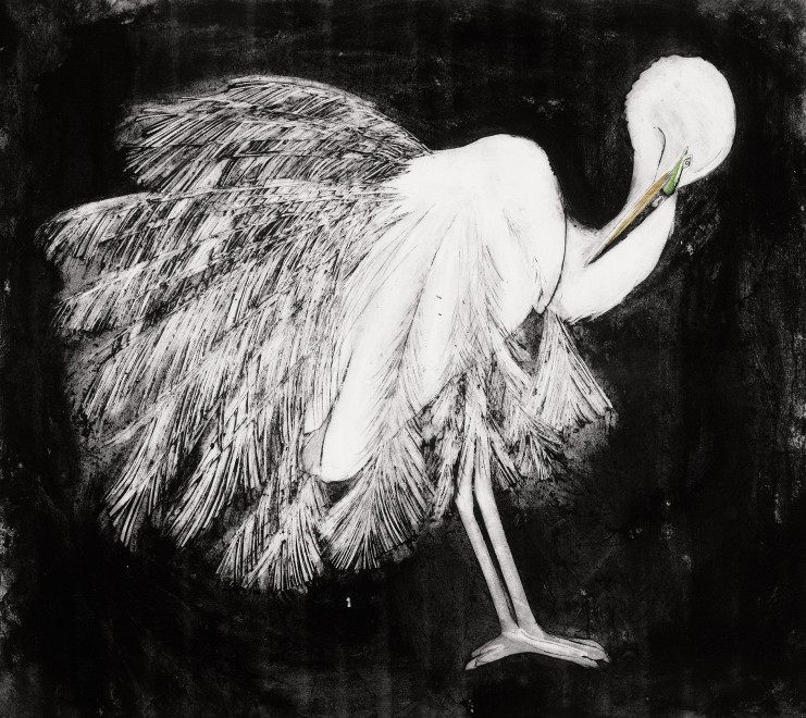 Beatrice Forshall, Great white Egret